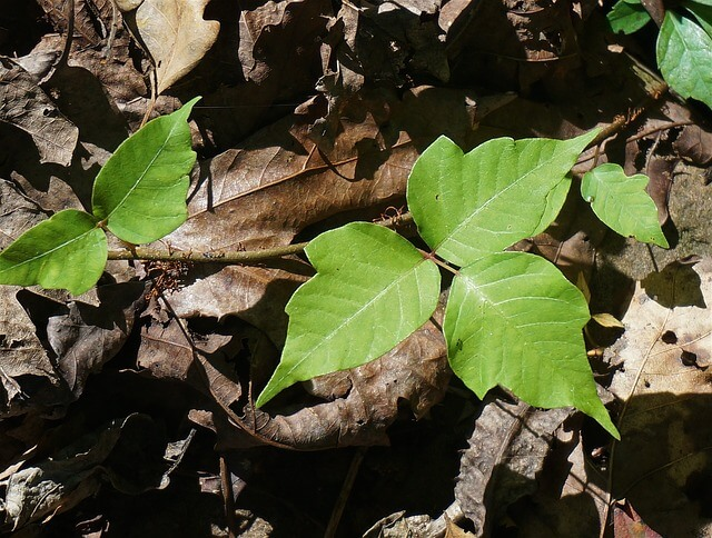 hiking, poisonous plants, poison ivy, hiking tips